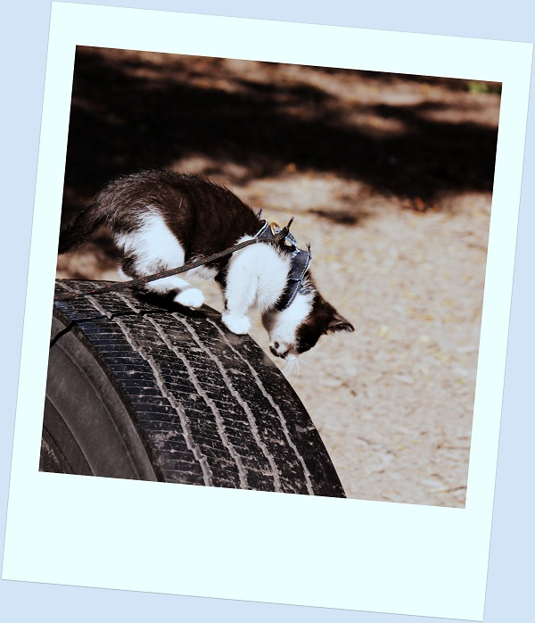 Kitten on Tire
