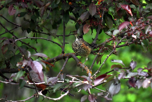 Wes.bird in tree