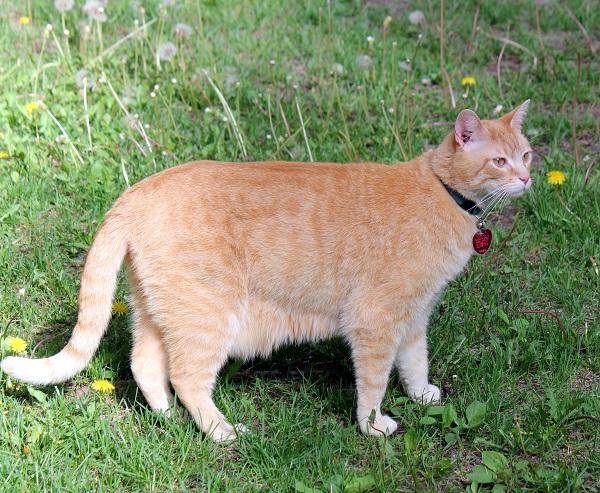 Wessie.cat.RMKK