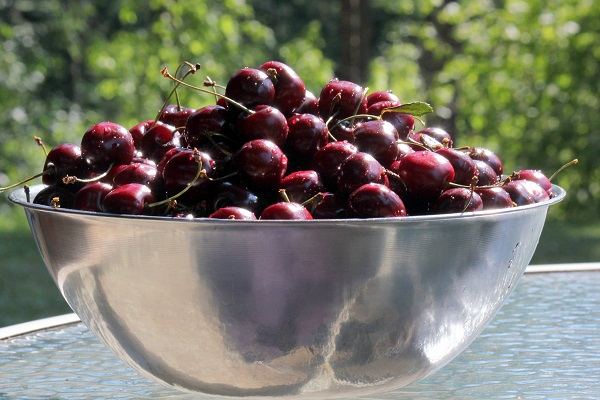 Just a few of the Flathead Cherries we picked for canning