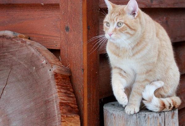 Tabby cat on stump