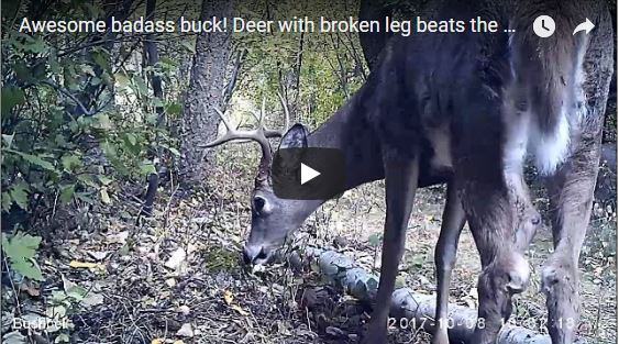 Broken Legged Deer